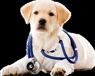 veterinario-portugalete.png