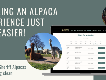 A spring clean for the Sheriff Alpacas site