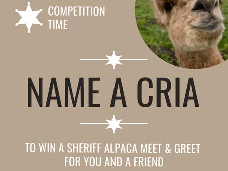 Name a cria competition