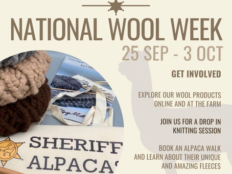 Announcing our new knitting workshops