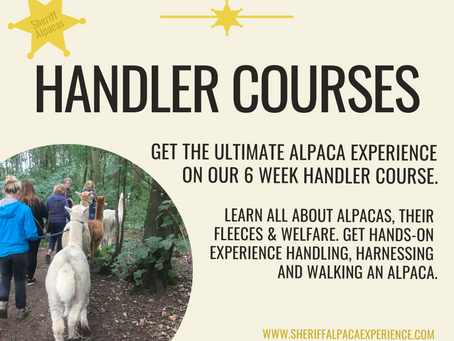 Become an alpaca expert on our new 6 week course