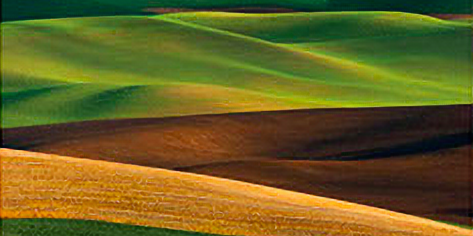 Qatar toward a Greener Land