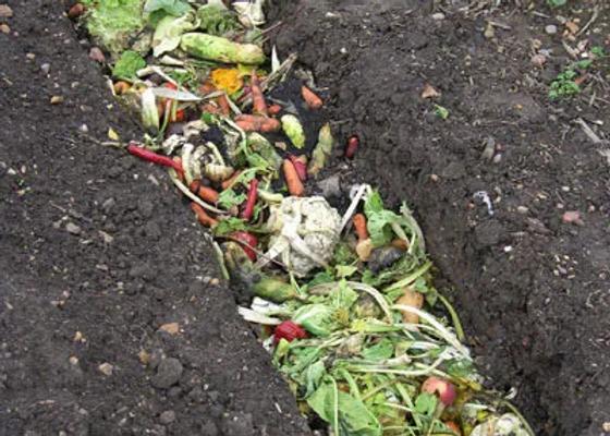 trench-composting_large_jpg.webp