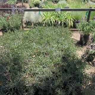 Los Angeles Native Plant Nursery.