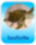 SeaTurtle.png