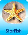 StarFish Icon.jpg