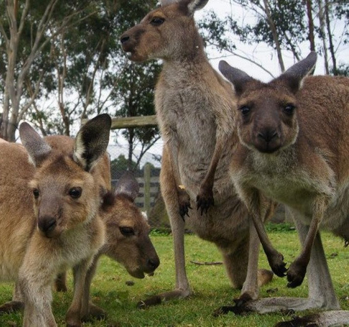 Hunter Valley Zoo Tour ex SYD