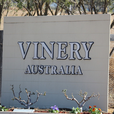 Vinery Stud Stallion Parade 2019