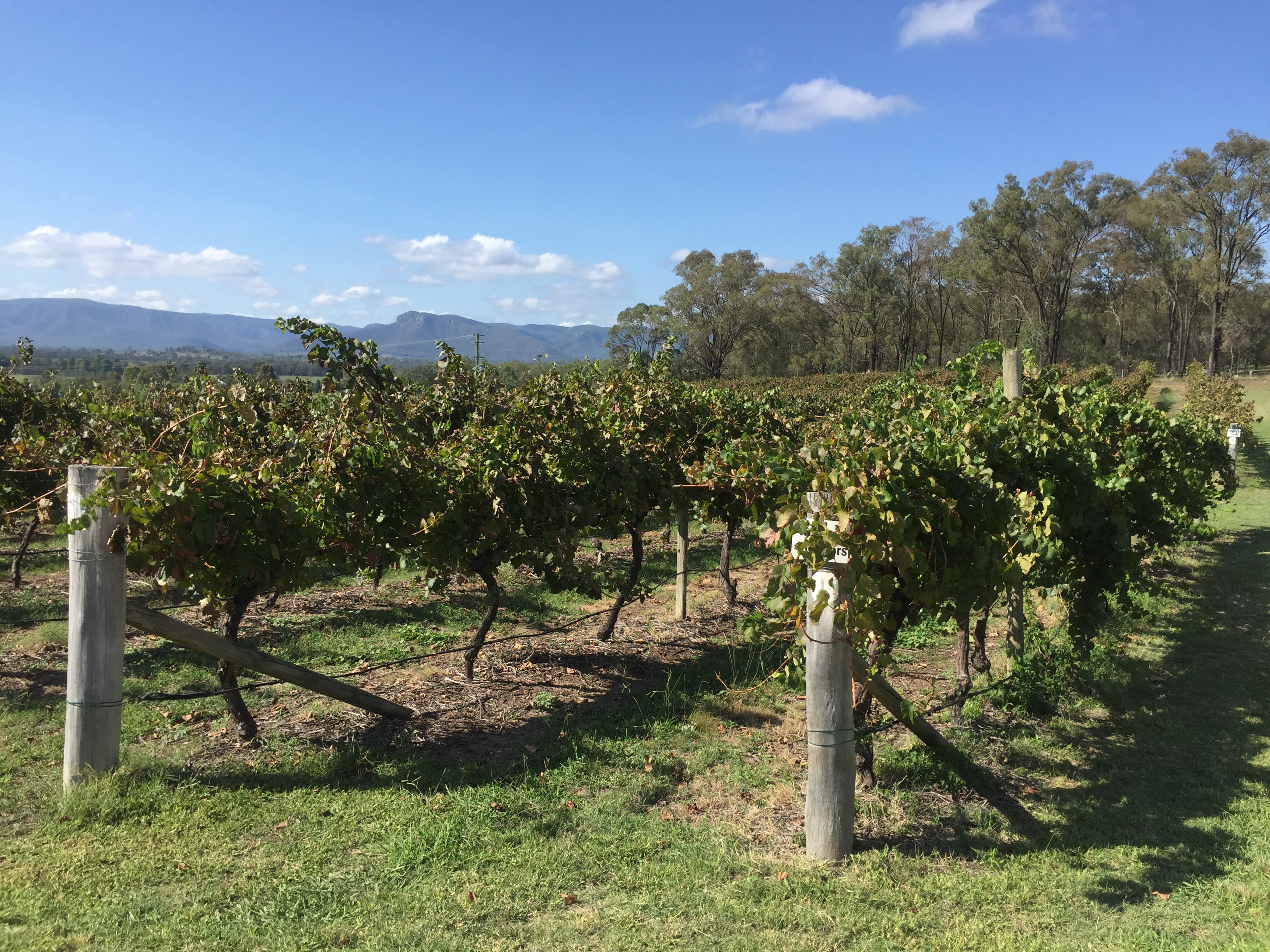 Hunter Valley Wine and Food Tour ex HV