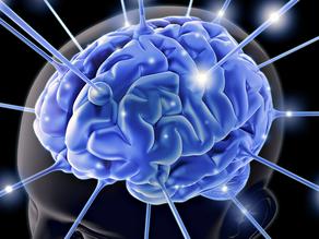 The human brain and leadership behaviour