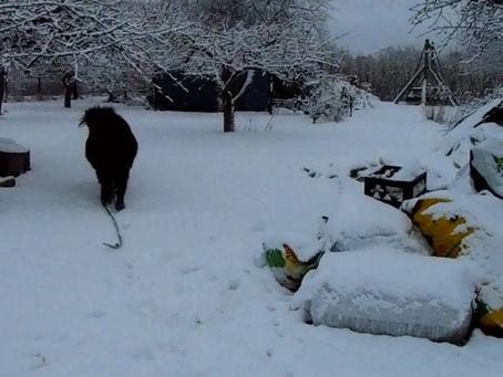 Vahva hetk talvest, kui Miki lumes jooksma pääses! (02.07.2017)