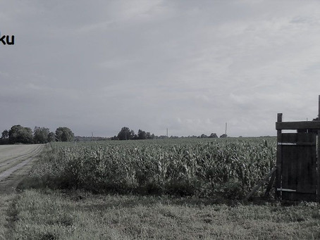 Uks ootab põllu ääres, et sein kasvaks :) (02.08.2017)