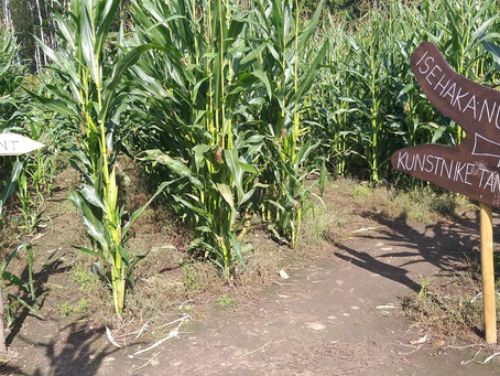 Selleaastase uue asjana saab maisipõllul salaja kunstnik olla! (25.08.2019)