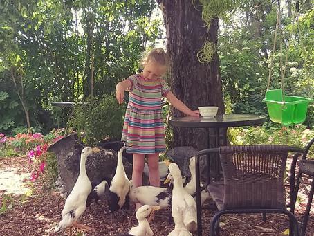 Piibu-piibud harjutavad hoolega, et inimene on sõber :) (03.07.2019)