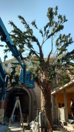 tree 16.jpg