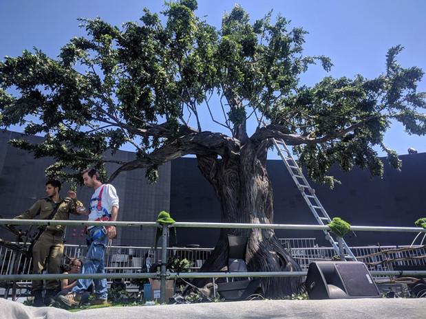 tree 6.jpg