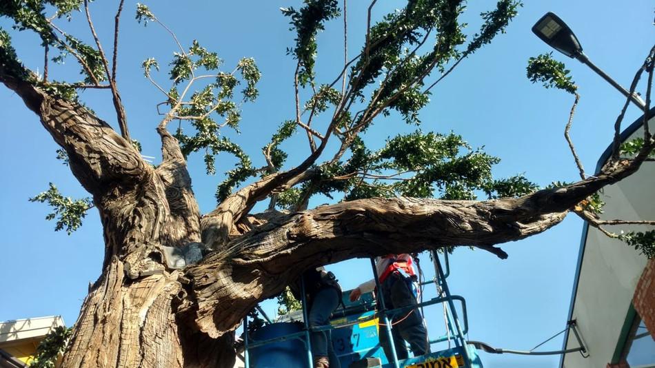 tree 17.jpg