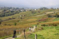 Balade dans les vignes des vins de Savoie, en Segway!