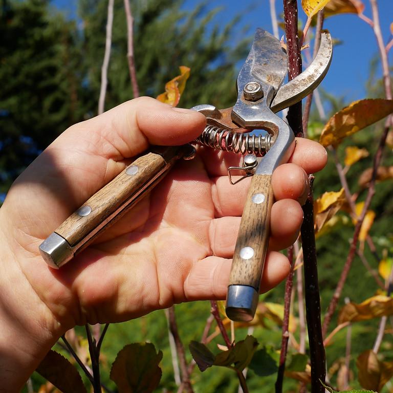 Stone Fruit Tree Pruning Workshop
