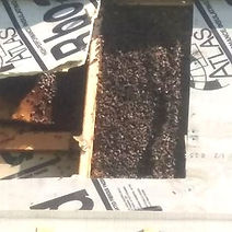 bee hive being removed