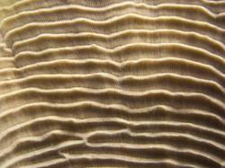 coral_img_2180-450x337.jpg