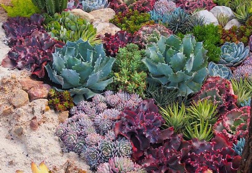 Succulent Jewel Garden