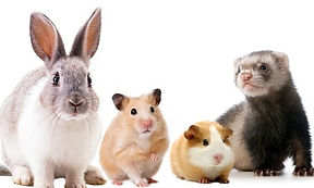 SMALL ANIMALS.jpg