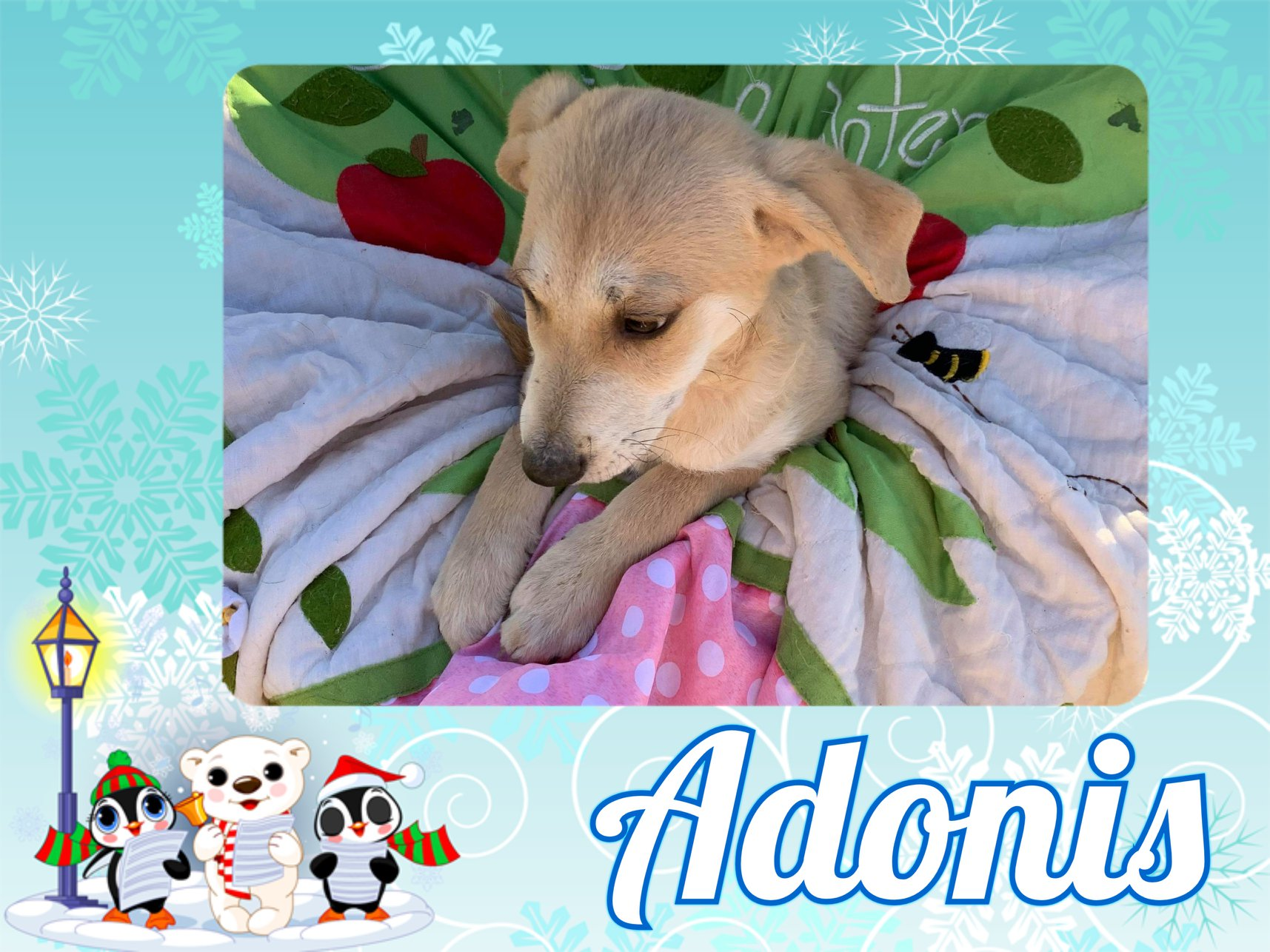 Adirondack Save A Stray - Puppies and dogs for adoption