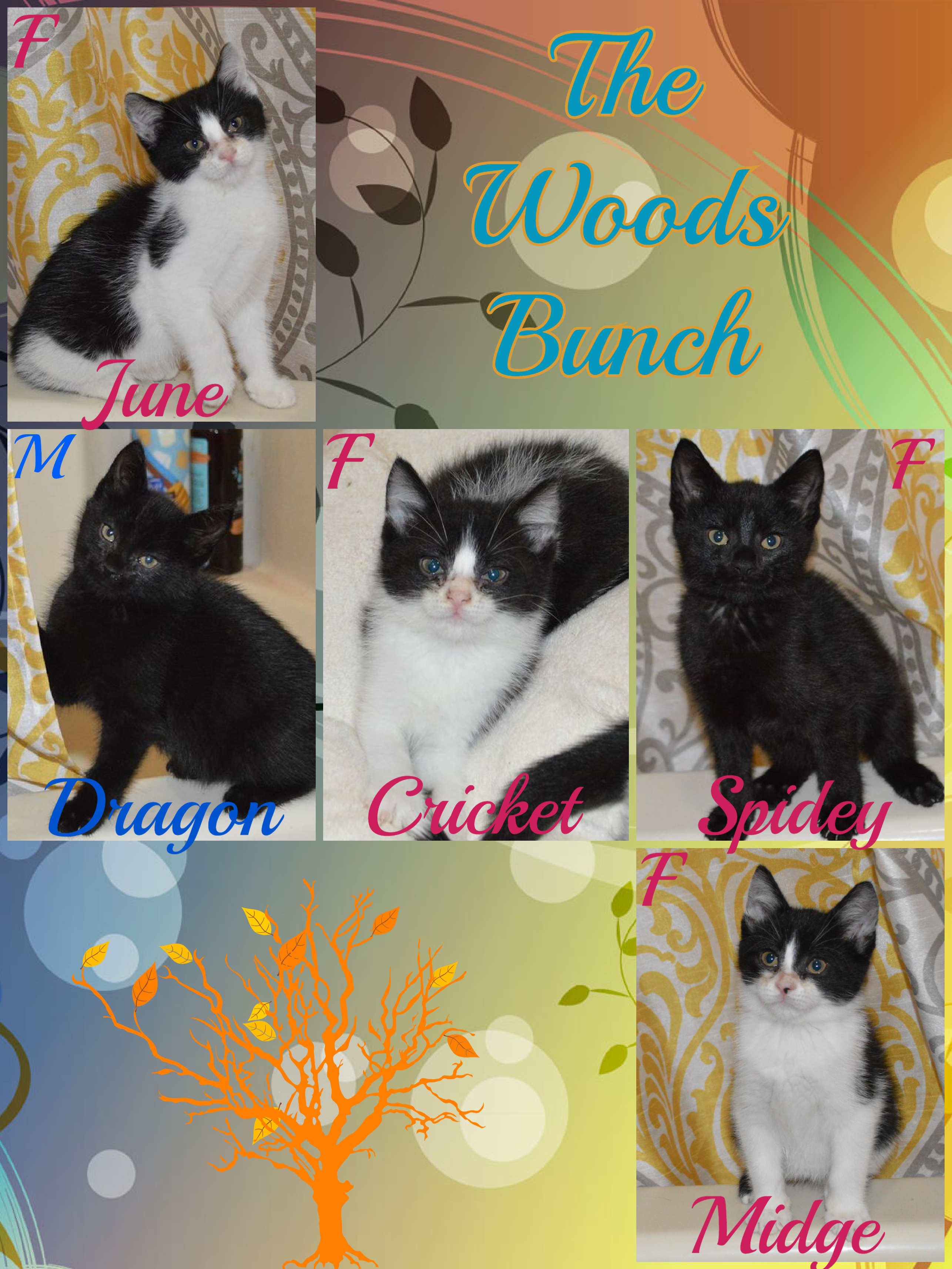 WOODS BUNCH