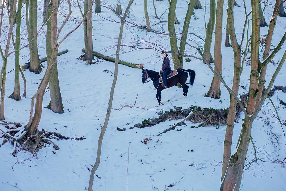 Активний відпочинок з кіньми зимою