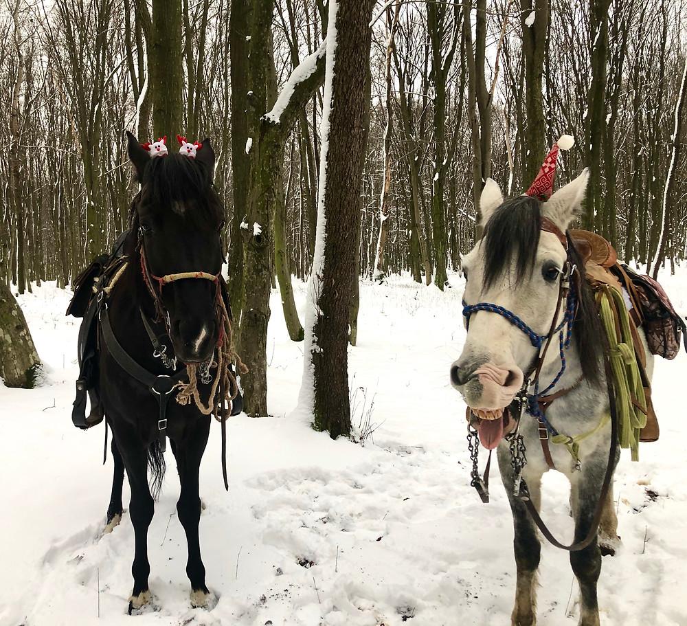 навчання верхової їзди в передмісті Львова