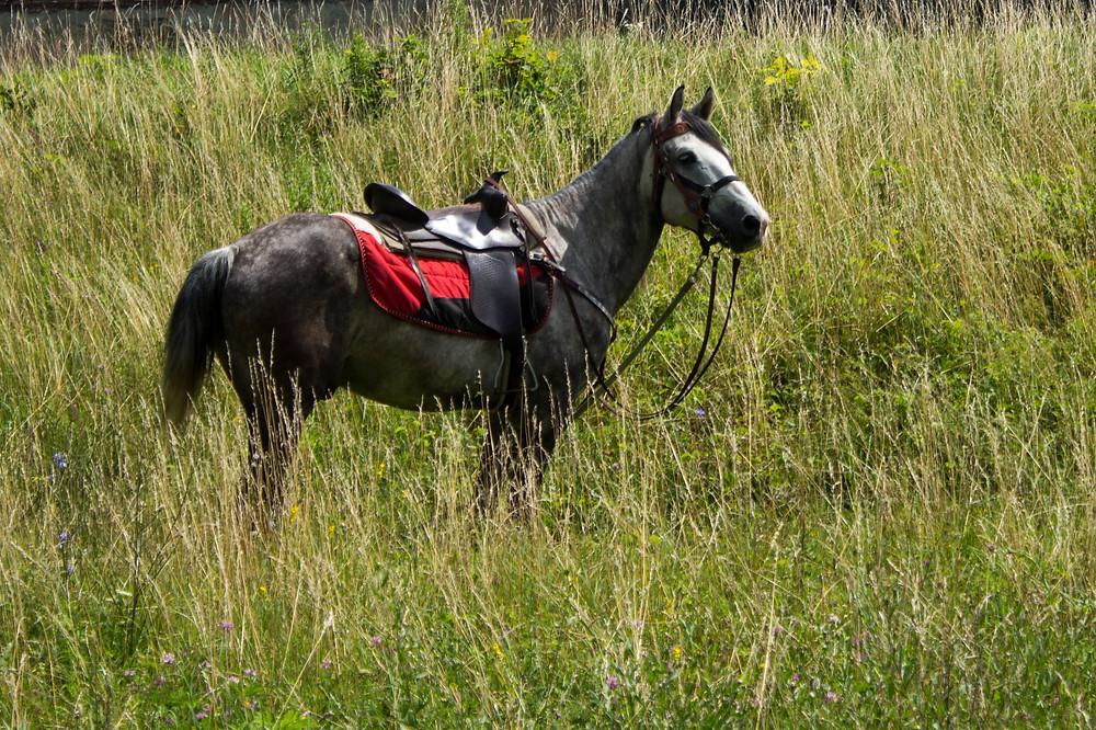 як далеко бачать коні