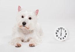 cute-small-dog-with-clock.jpg