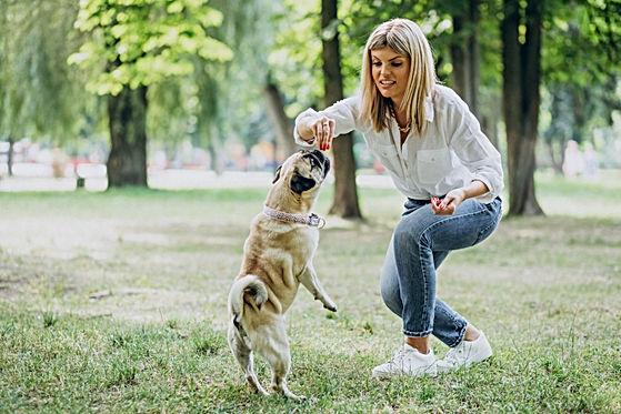 woman-having-walk-park-with-her-pug-dog-