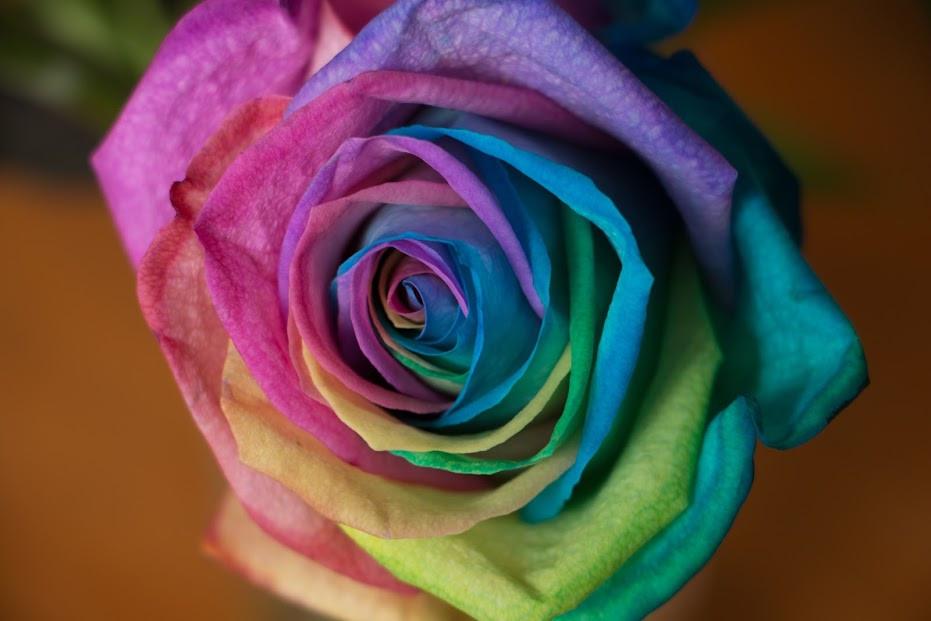 La rose et le génome : un parfum de sciences sur France Culture