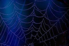 spider-2990108_960_720.jpg