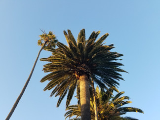 Venice Canal Palm Trees