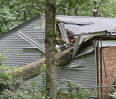 עץ שנפל