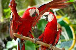 macaw land