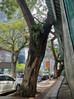 Kisah Sedih Pokok Tua, Sekadar di Pinggiran