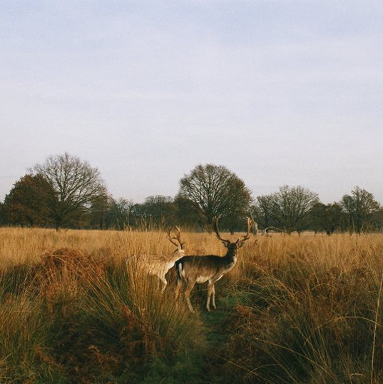 RICHMOND PARK, LONDON