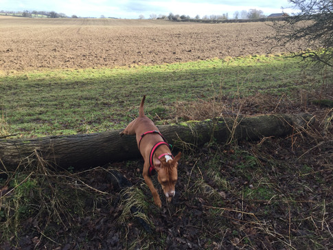 Woburn forest jump with pet sitters