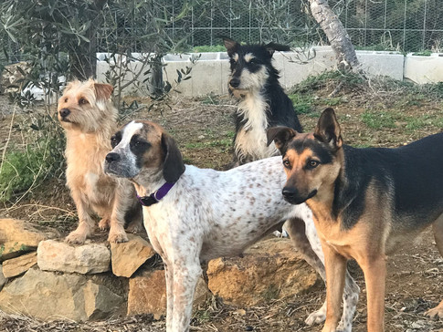The leaders of the pack out for the day in dog daycare