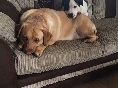 Relaxing cosy dogs in Bletchley Daycare