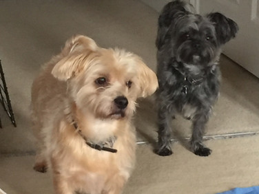 Little gems in doggie day care