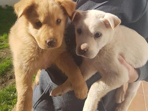 Pet sitter dog puppy love