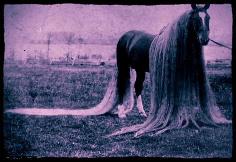 long-haired horse_edited.jpg