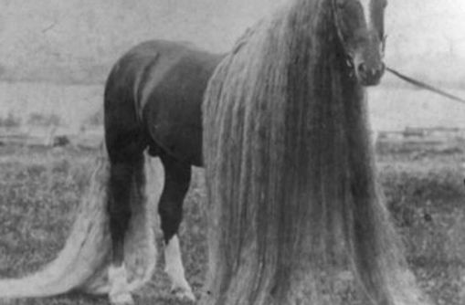 long-haired horse_edited.jpg