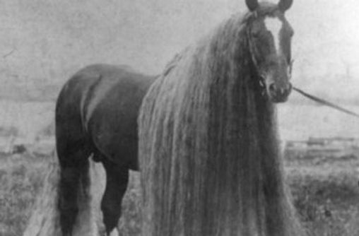 long-haired horse_edited_edited.jpg