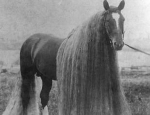 long-haired horse_edited_edited.jpg